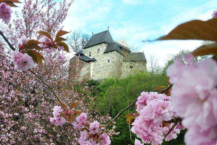 Burg Krumau mit rosa Blüten